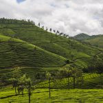 India-mountains-landscape-tea-kerala-cochin-958510-wallhere.com